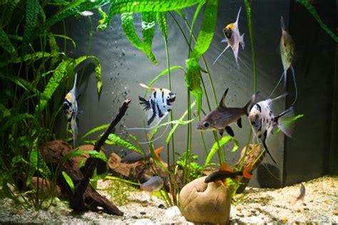 anguille aquarium eau douce poisson aquarium eau douce conseils sur les poissons d eau douce