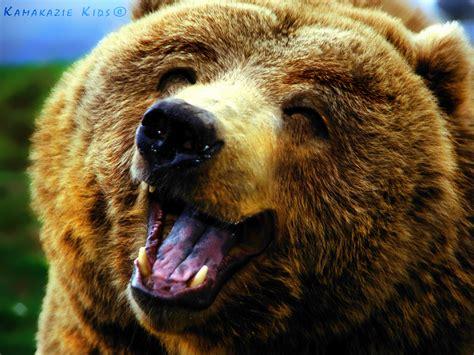 Happy Bear By Kamakaziekids On Deviantart