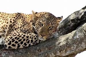 Gibt Es Mirabeau Nicht Mehr : sie gibt es nicht mehr foto bild tiere wildlife s ugetiere bilder auf fotocommunity ~ Orissabook.com Haus und Dekorationen