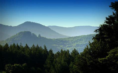 beautiful forests   world