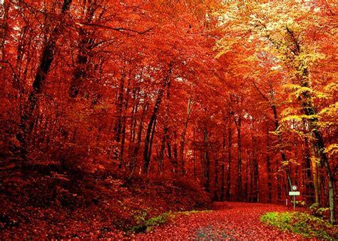 fall trees joie de vivre 5 things i love fall edition