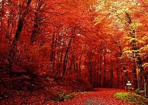 Joie De Vivre : 5 Things I love, Fall edition