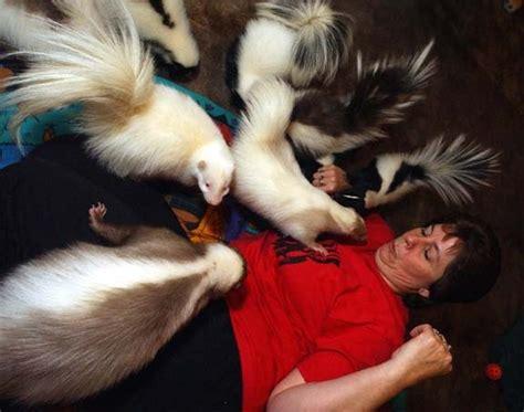 skunks as pets skunks as pets