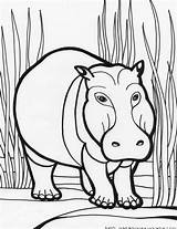 Hippo Coloring Pages Printable Getdrawings Getcolorings sketch template