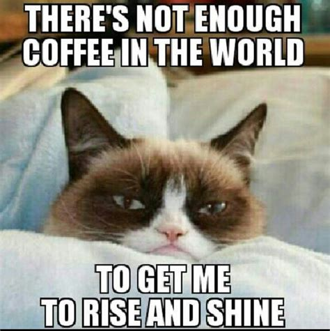 Grumpy Cat Sleep Meme - sleepy cat quot open up your heart and let the sun shine in quot pinterest