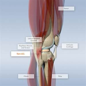 Discover Knee Anatomy And Maladies