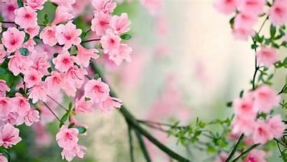 Spring Nature Background Desktop Wallpapers Widescreen Pink