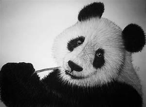 pencil drawings of panda bears MEMES