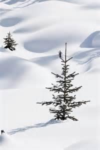Banff National Park Alberta Canada Winter