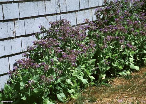 Unusual Herbs To Grow