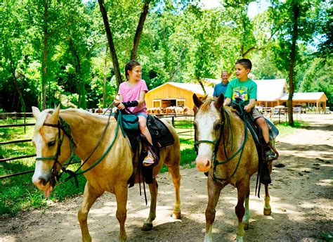 Horse Ride On Hire In Hyderabad For Event / Birthday Party ...