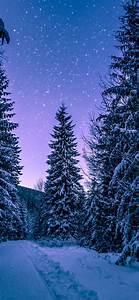 nx97 snow winter wood tree road nature wallpaper