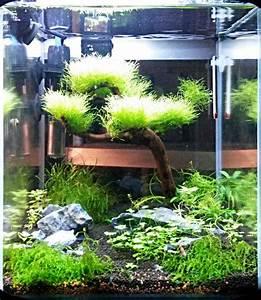 Welchen Dünger Für Aquarienpflanzen : aquarienpflanzen hejato einrichtungsbeispiel fuer einsteiger ~ Michelbontemps.com Haus und Dekorationen