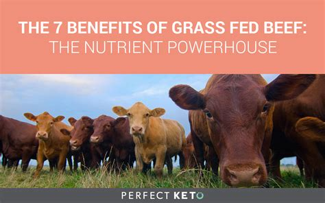 benefits  grass fed beef  nutritional powerhouse