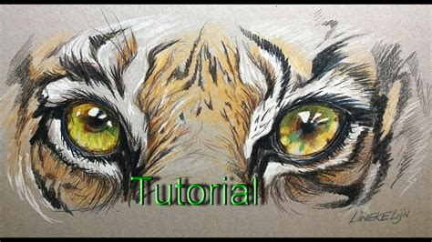 easy tiger eye  beginners color pencil drawing youtube