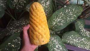 Ananas Schneiden Gerät : ananas verlustarm schneiden youtube ~ Watch28wear.com Haus und Dekorationen