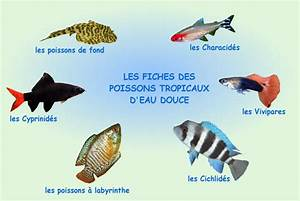 Poisson Aquarium Eau Chaude : liste poisson aquarium eau douce poisson naturel ~ Mglfilm.com Idées de Décoration