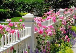 Rosen Und Lavendel : romantischer vorgarten mit rosen und lavendel g rten von g rtner ~ Yasmunasinghe.com Haus und Dekorationen
