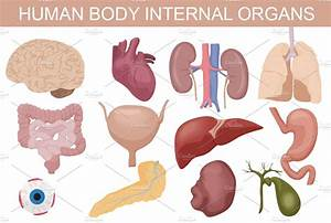 Human Body Internal Organs Set