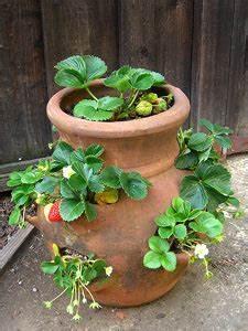 Plant De Fraise : quelle fleur avec les fraisiers ~ Premium-room.com Idées de Décoration