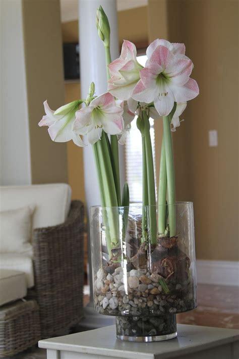 best 25 bulbs ideas on planting bulbs garden