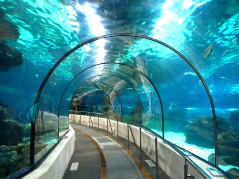 build  tunnel underwater wonderopolis