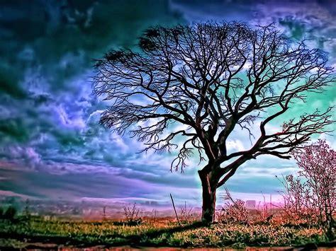 Beautiful Tree Wallpaper For Desktop by Labels Big Tree Wallpapers Hd