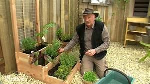 Herbes Aromatiques En Pot : cultiver des plantes aromatiques en pot youtube ~ Premium-room.com Idées de Décoration