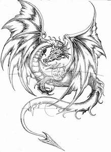 Dragon Body Drawing At Paintingvalley Com