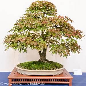 Bonsai Baum Schneiden : bonsai ahorn schneiden pflanzen f r nassen boden ~ Frokenaadalensverden.com Haus und Dekorationen