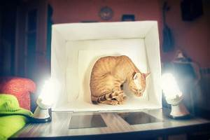 Step By Step Instructions To Build A Diy Lightbox