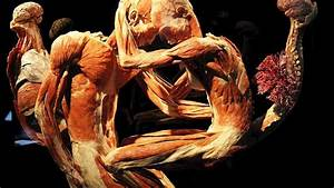 BODY WORLDS : The Happiness Project - Exhibition Amsterdam ...