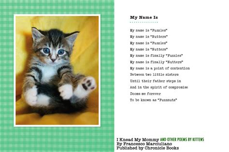 poems about cats i knead my and other poems by kittens the book