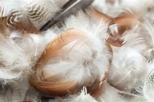 Edredon Plume D Oie : des couettes et des oreillers en plumes d 39 oie ~ Nature-et-papiers.com Idées de Décoration