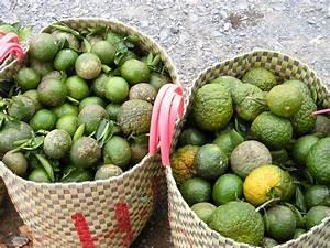 Orange Vert Quel Couleur : les fruits de tha lande guide tha lande ~ Dallasstarsshop.com Idées de Décoration