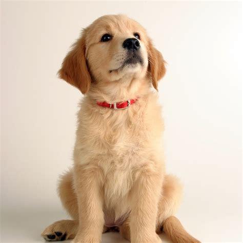 le chauffante pour chiot un nom pour mon chien 2017 l 233 e du n nom de chien accueillir un chien chiens