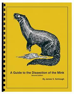 A Guide To The Dissection Of The Mink