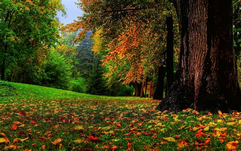 Nature, Fall, Landscape, Trees Wallpapers Hd  Desktop And