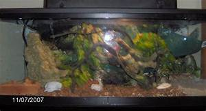 The gallery for --> Green Anole Lizard Tanks