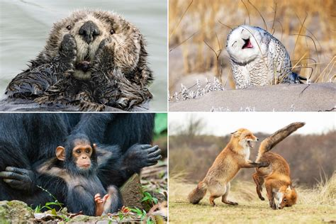 animals  funny   comedy wildlife awards prove