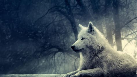 Cool Animal Wallpapers Wolf - 10 top cool animal wallpapers wolf hd 1920 215 1080 for