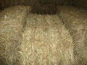 Orchard Grass Hay For Cattle