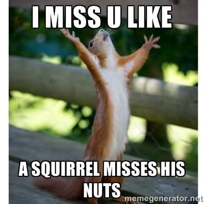 I Miss U Meme - 35 very funny squirrel meme pictures and images