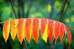 Rote Blätter Baum : herbst rote und gelbe bl tter im freien auf baum ~ Michelbontemps.com Haus und Dekorationen
