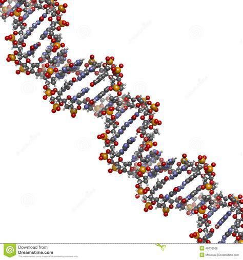 DNA Structure, B DNA Form. Stock Illustration   Image: 48132508