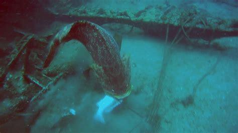 grouper goliath spear challenges fisherman scuba divers diving