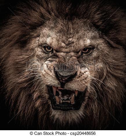 lion roaring close shot