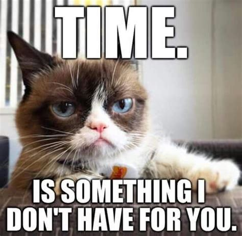 Meme Angry Cat - angry cat memes 2018 funny cats