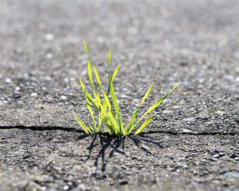 Easy Ways to Control Grass and Weeds in Driveway