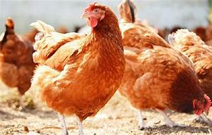 'Not possible to sell chicken at price decided by govt ...